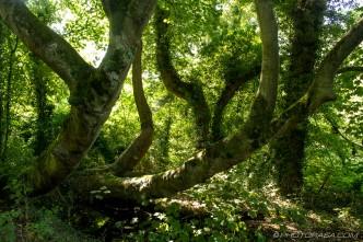 fallen trees growing upwards