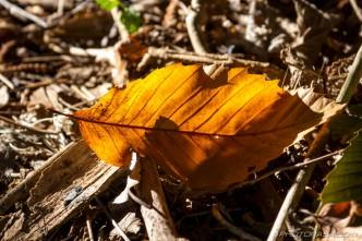 autumn leaf in sun