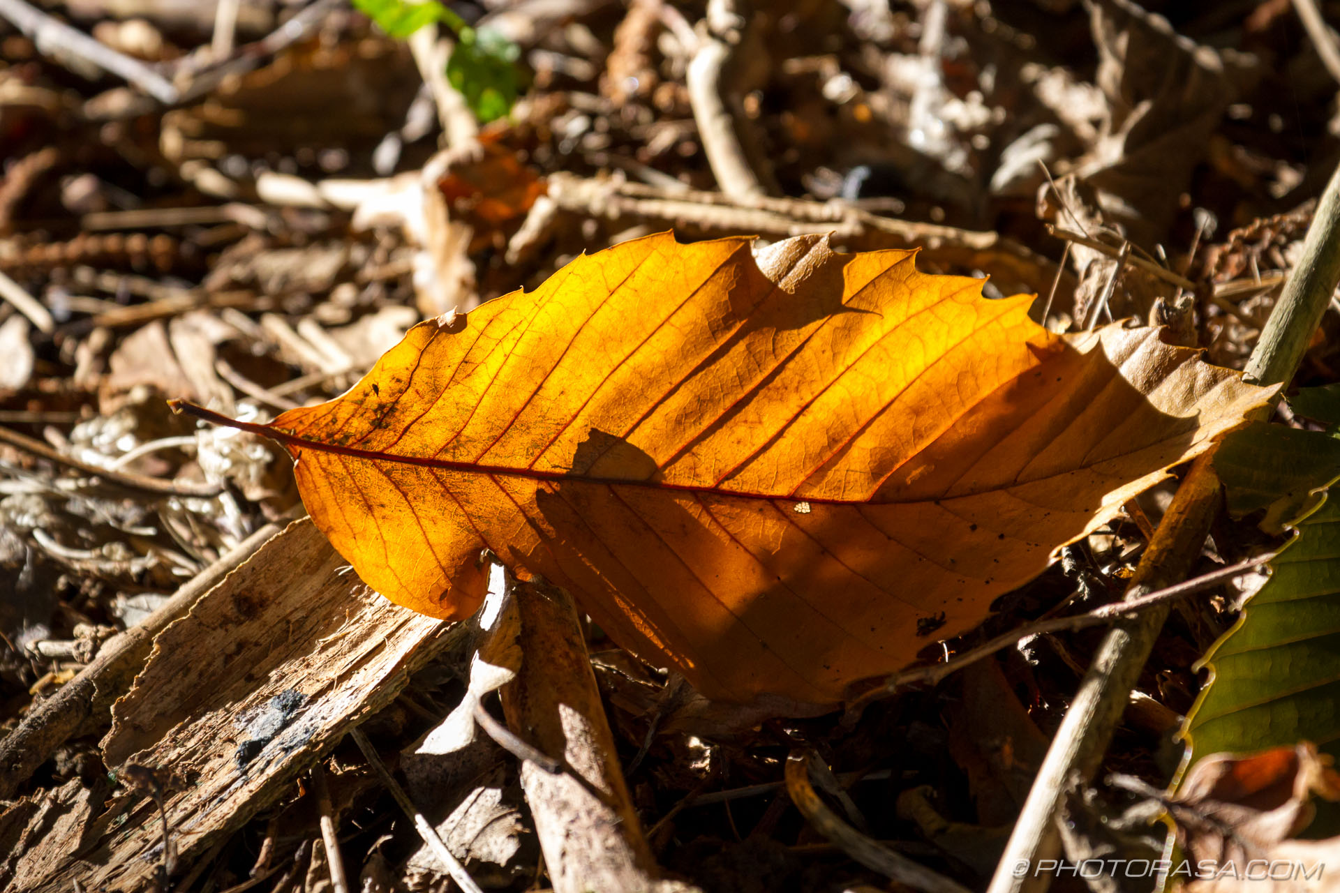 http://photorasa.com/autumn-dappled-light/autumn-leaf-in-sun/