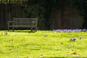 bench and crocuses on boughton green