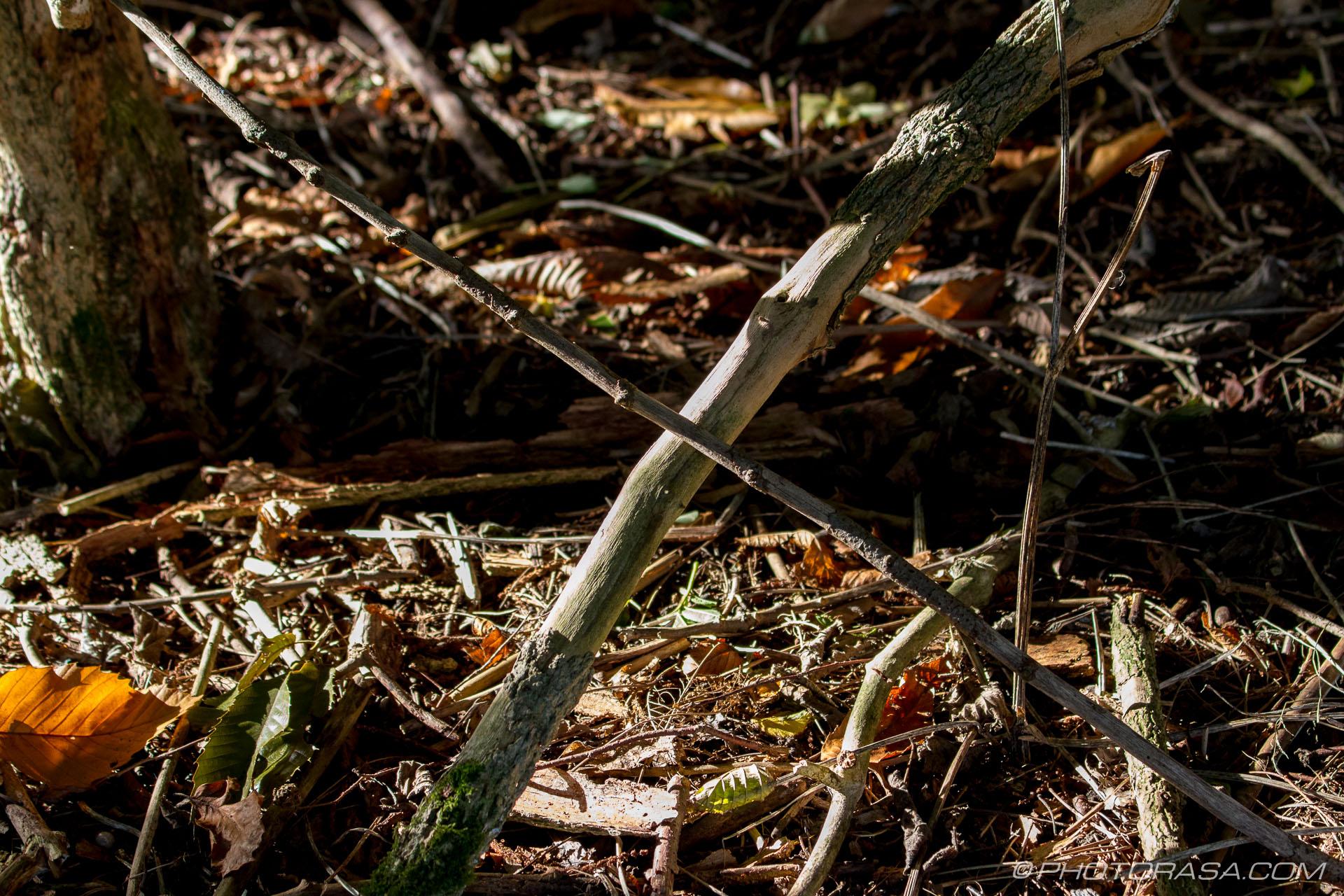 http://photorasa.com/autumn-dappled-light/criss-cross-sticks-in-dappled-light/
