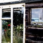 flowers in shed window