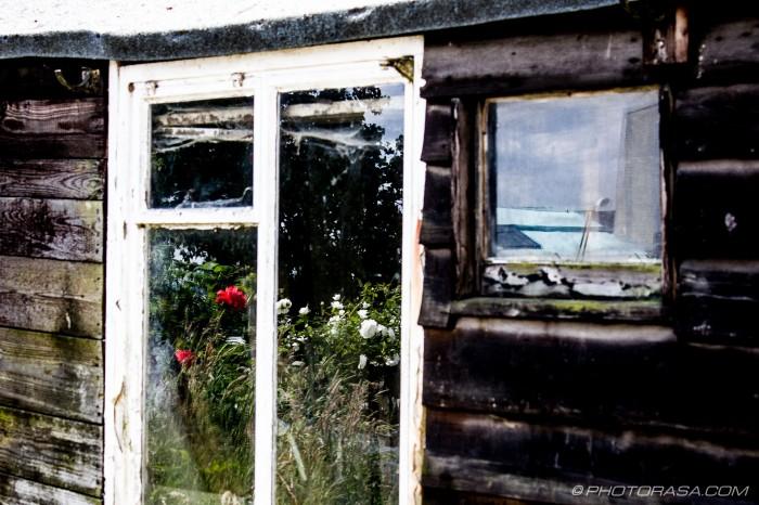 flowers in shed window