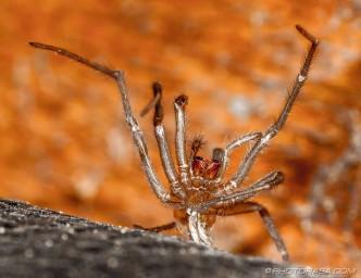 frozen spider