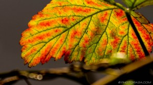 red, green and yellow leaf