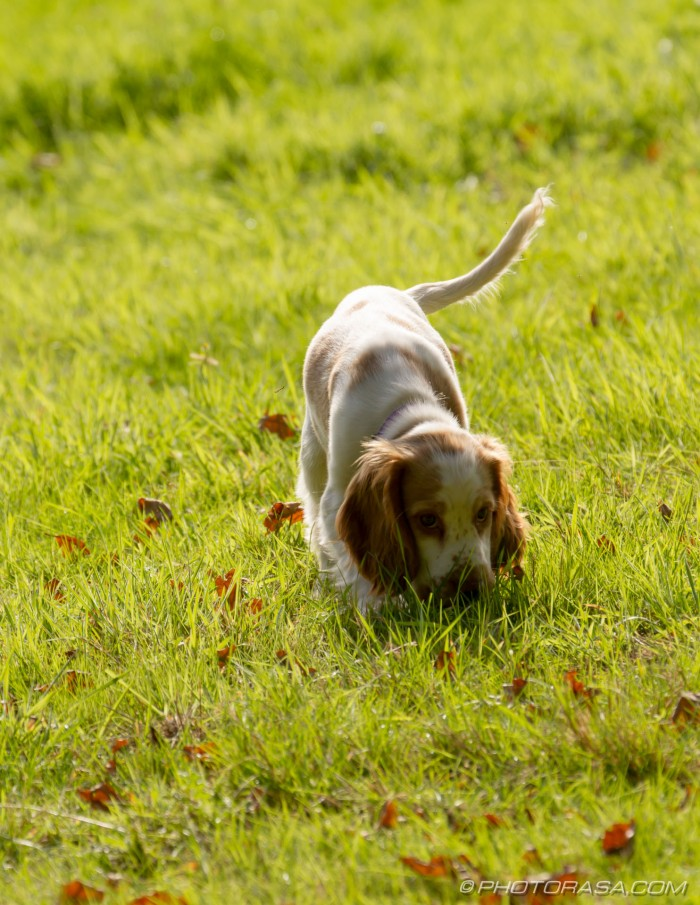 sniffing the ground