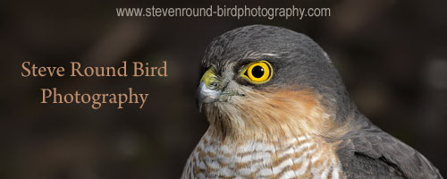 steve round bird photography