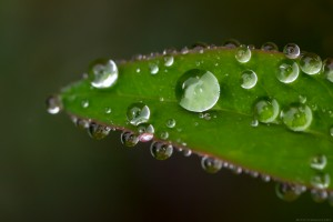 close up of water dewdrops on leaf