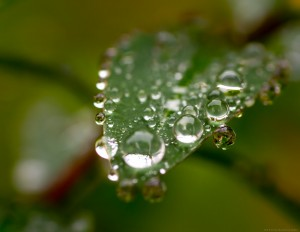dewdrops on edge and face of leaf