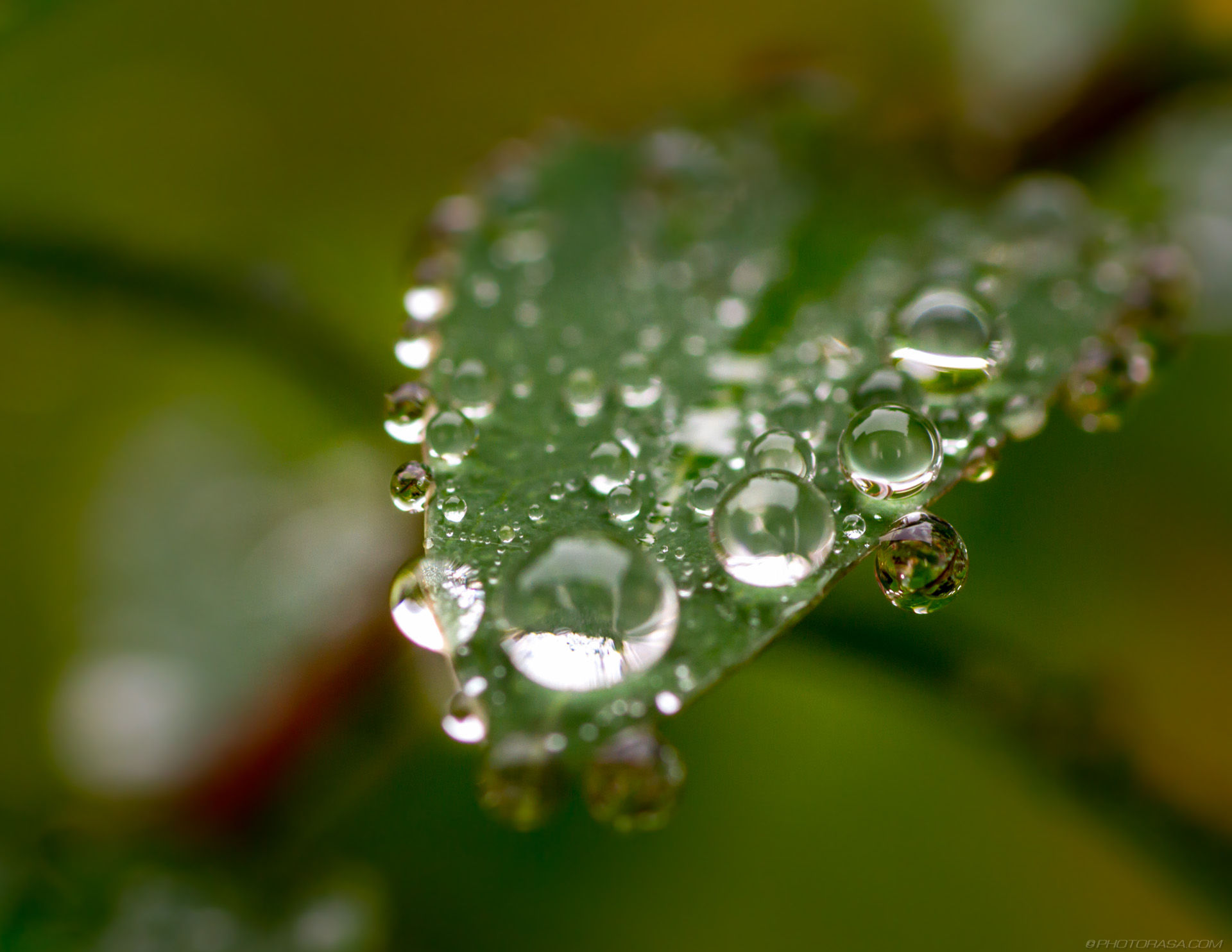 http://photorasa.com/dewdrops-tiny-leaves/dewdrops-on-edge-and-face-of-leaf/
