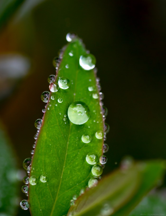 dewdrops on leaf