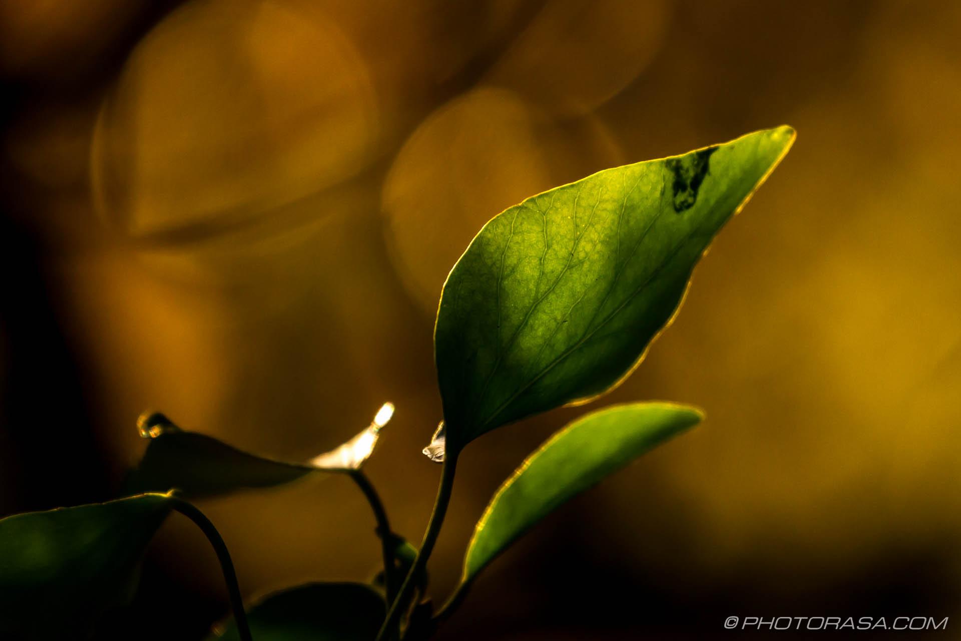 http://photorasa.com/autumn-leaves-sunlight/green-vine-leaf-and-opaque-veins/