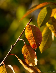 leaves angled on a branch
