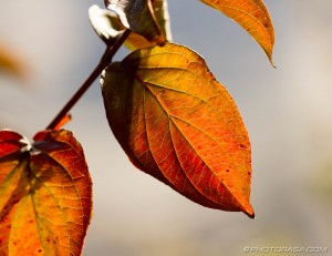 leaves showing autumns glow