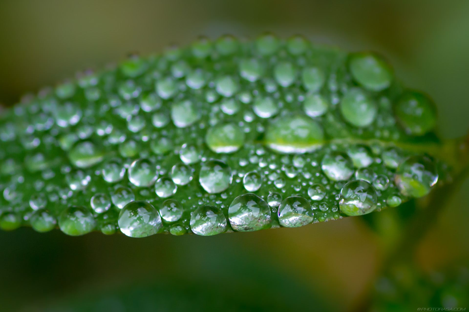 https://photorasa.com/dewdrops-tiny-leaves/loads-of-tiny-water-droplets-on-leaf/