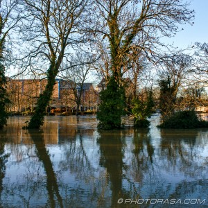 lockmeadow through trees and flooded medway