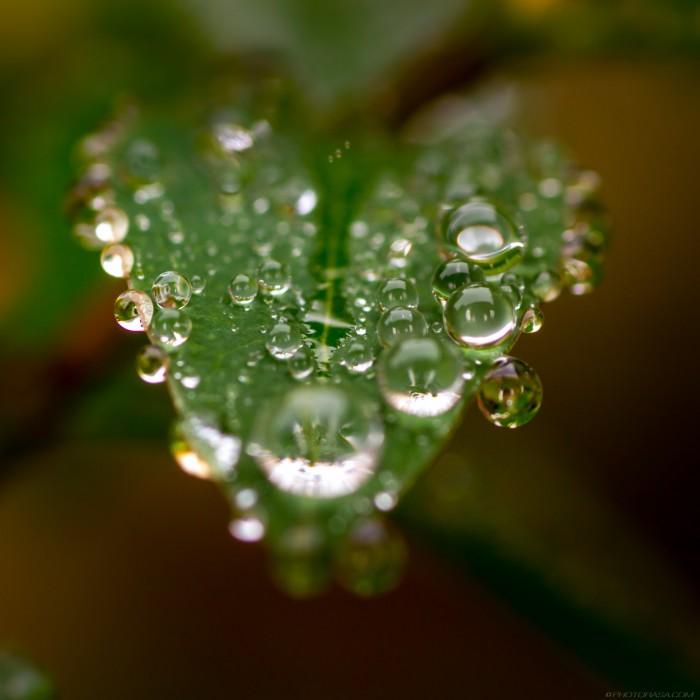 macro of water droplets on leaf
