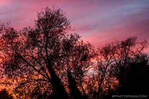 red sky through the trees