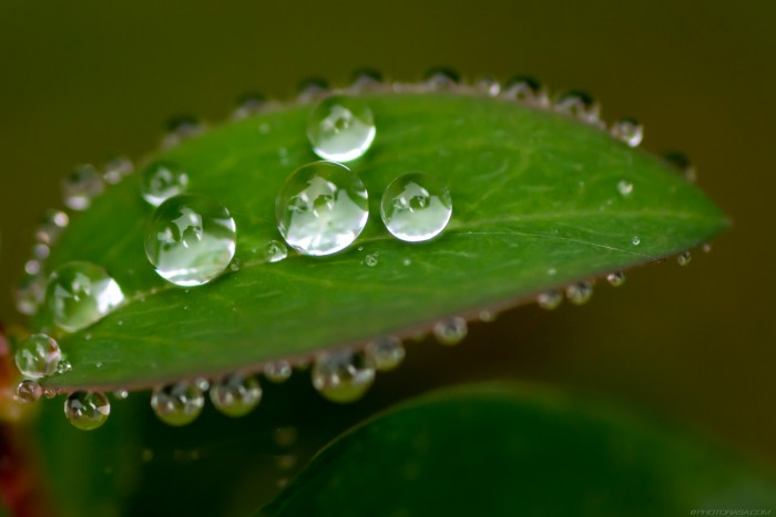 tiny round blobs of water on tiny leaf