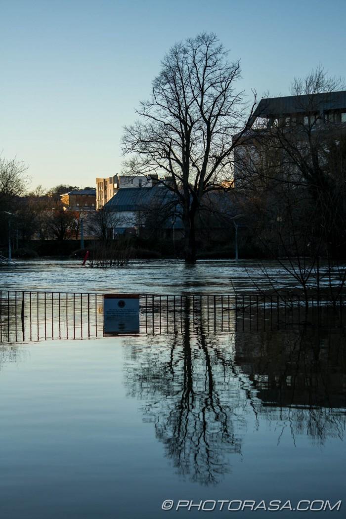 submerged tree near maidstone law courts