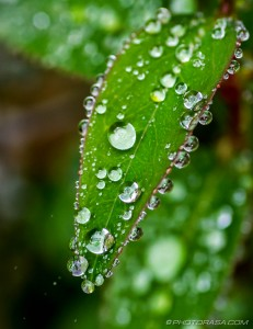 tiny water droplets on small leaf