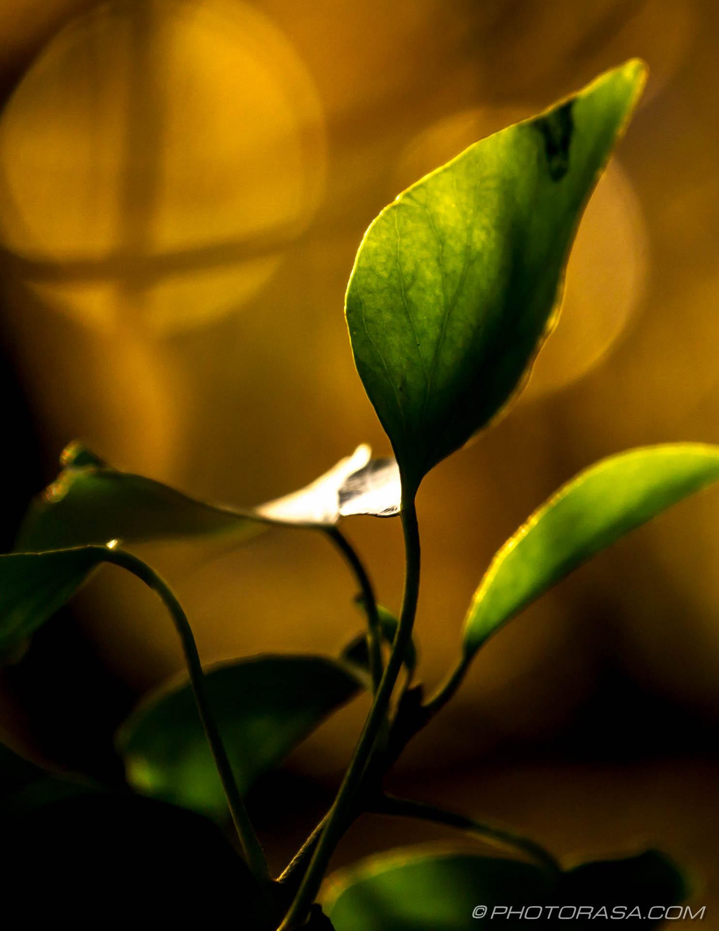 http://photorasa.com/autumn-leaves-sunlight/transparent-vine-leaves-in-autumn-light/