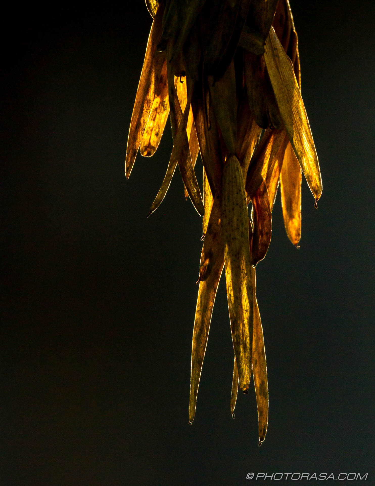 http://photorasa.com/autumn-leaves-sunlight/vegetation-hanging-from-tree-in-autumn/