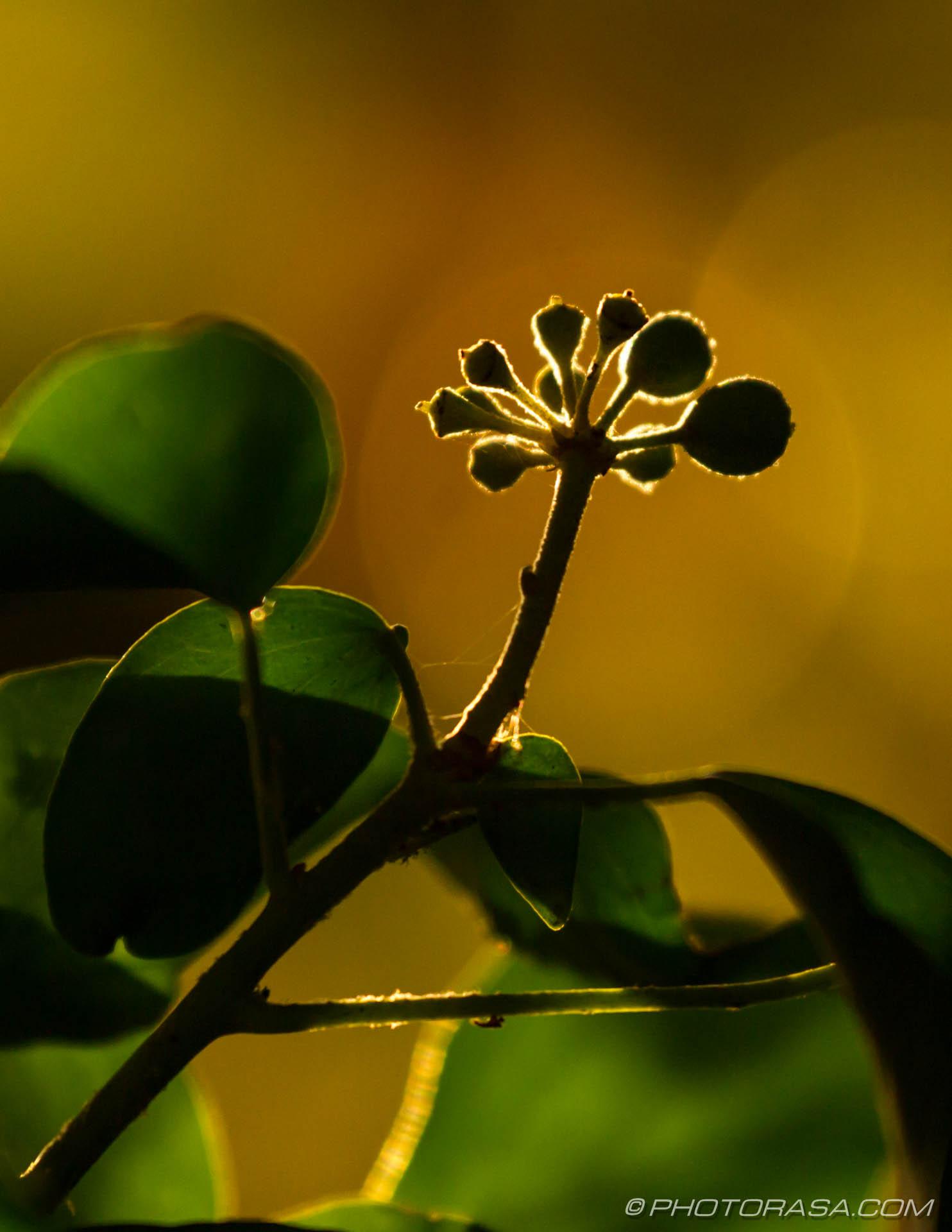 http://photorasa.com/autumn-leaves-sunlight/vine-leaf-buds-catching-the-sun-near-sunset/