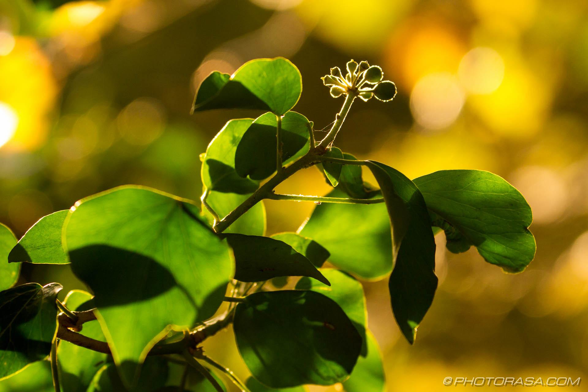 http://photorasa.com/autumn-leaves-sunlight/vine-leaves-at-low-sun-catching-the-light/