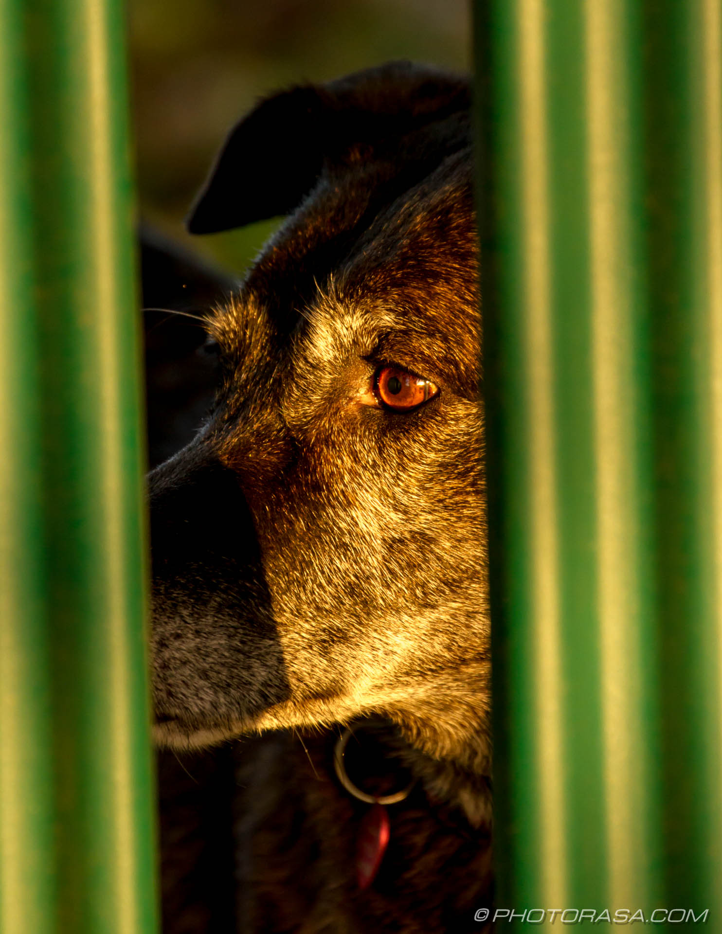 https://photorasa.com/old-guard-dog-fence/dog-looking-across-nervously-in-sunlight/