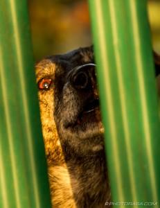dog staring through fence