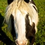 goldilocks the wonder pony