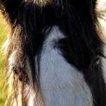 pony eyes