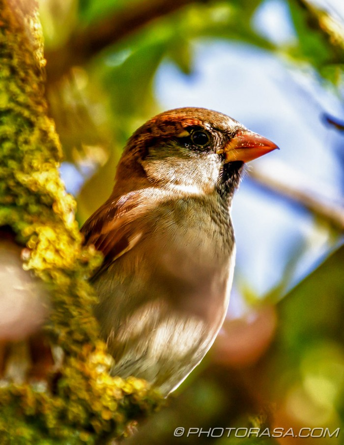 sparrow in greenery
