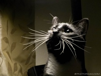 cats bright whiskers