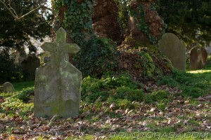 grave with cross shape next to london plain tree