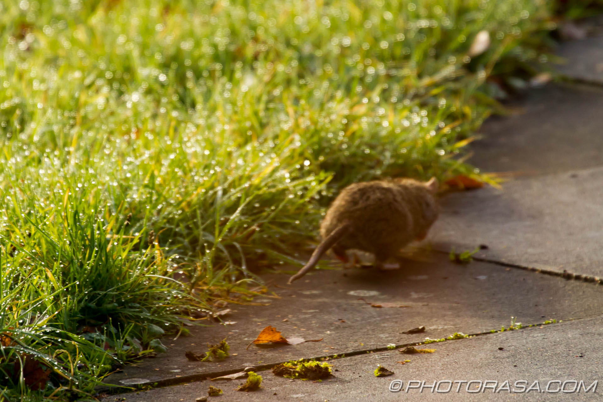 http://photorasa.com/river-rat-maidstone-market/river-rat-scuttling-off/