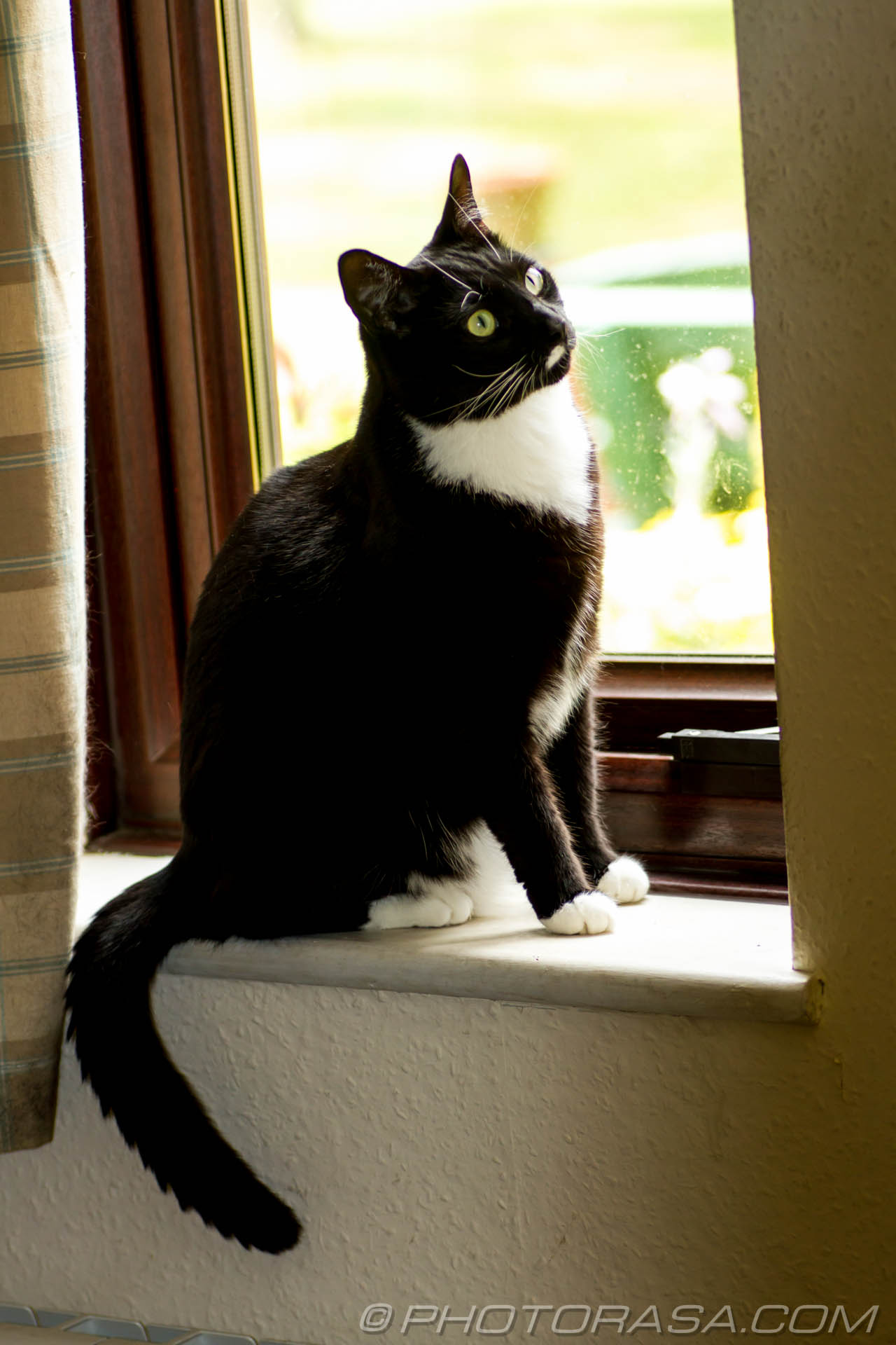http://photorasa.com/black-white-cats/sitting-at-the-window/