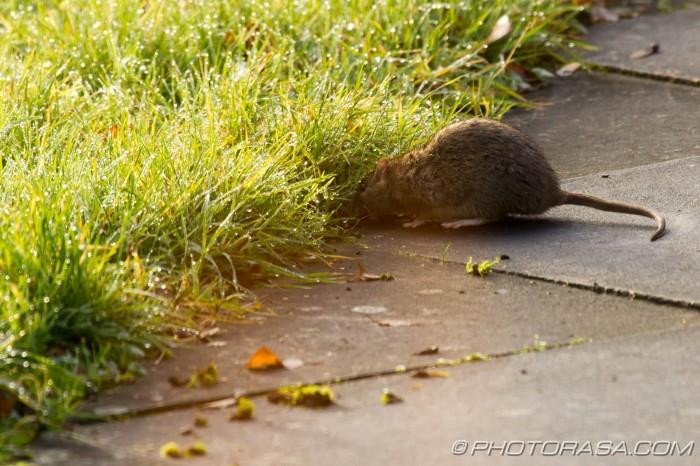 sniffing around grass verge