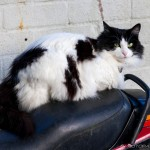 white black cat on bike seat