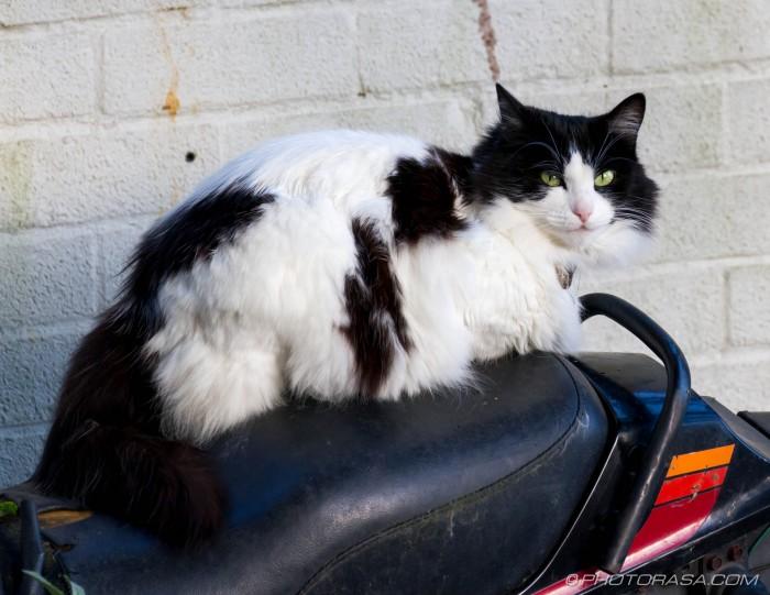 white black cat on bike seat