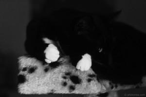 white paws