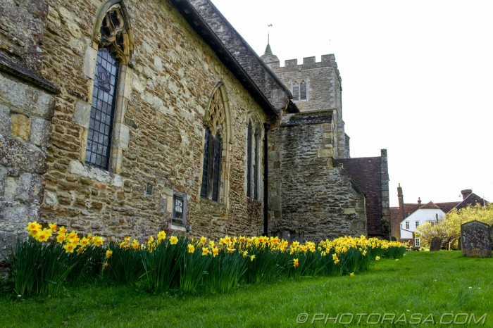 daffodils by the church
