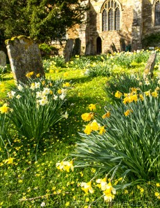 daffs and buttercups leading to church door