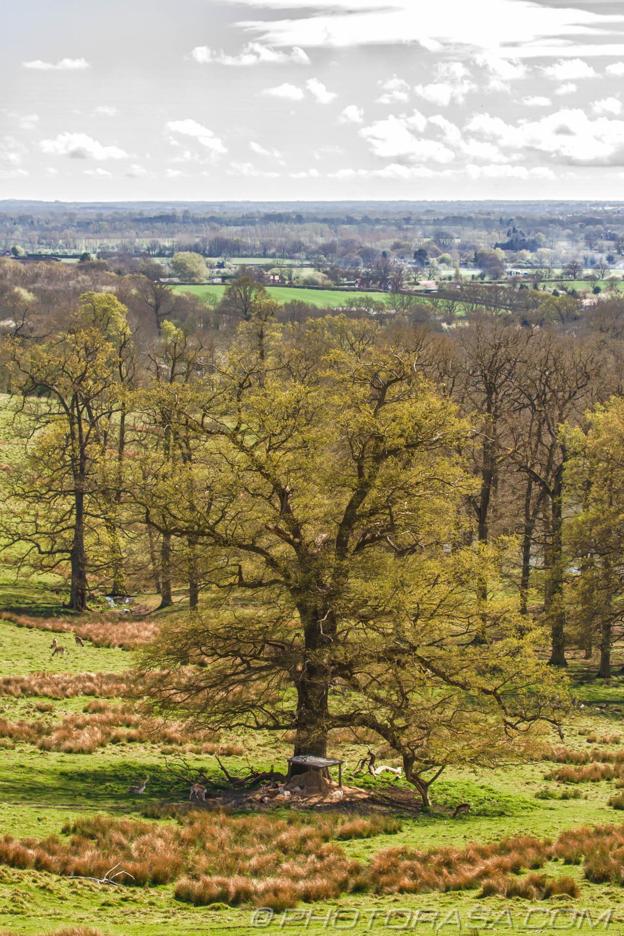 http://photorasa.com/view-boughton-monchelsea-churchyard/deer-under-great-oak/