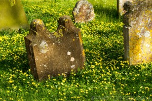 graves surrounded by buttercups