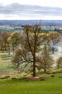 large oak in deer park