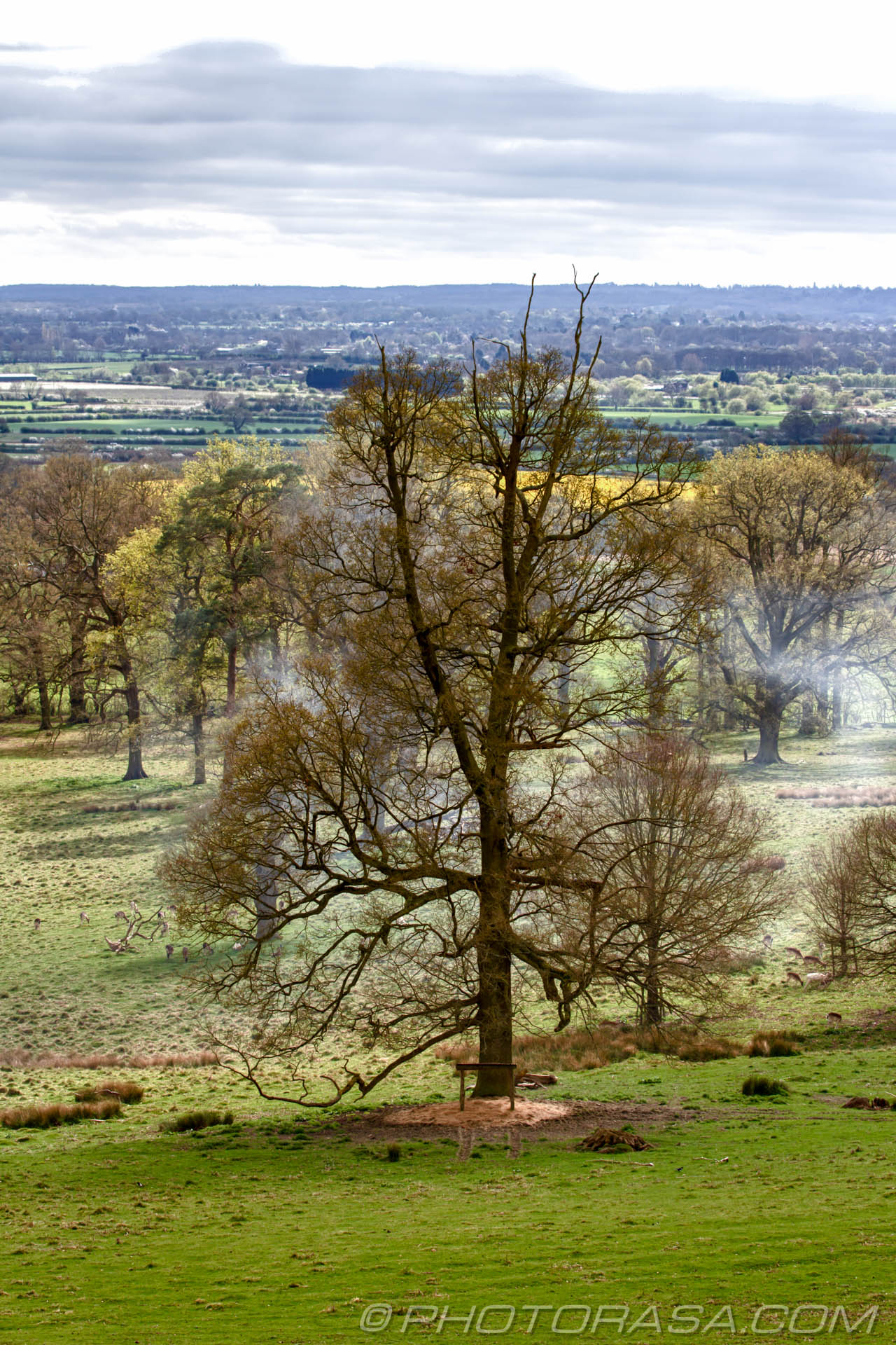 http://photorasa.com/view-boughton-monchelsea-churchyard/large-oak-in-deer-park/