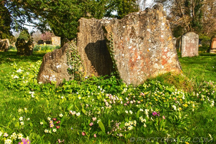 primroses next to bunch of graves