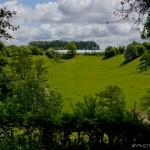 sheep field near stoneacre place